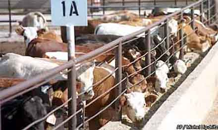 an introduction to the unethicality of factory farming For related articles and more information, please visit oca's cafos vs free range page and our millions against monsanto page editor's note: this is the second in a series of articles on how to boycott factory farms.