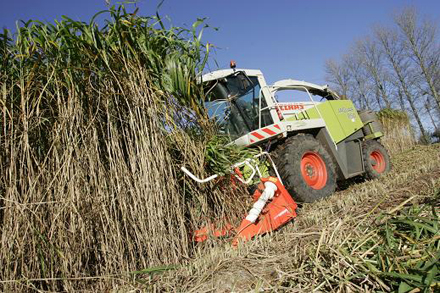 miscanthus_harvesting1.jpg