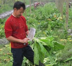 woshen-harvest