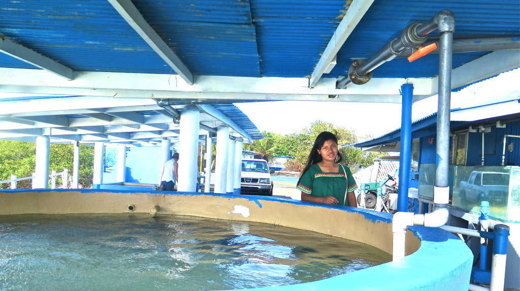 Stanley Heckadon-Moreno established and manages an active marine research education program that each year introduces thousands of students to marine science and ecology, among them 17-year-old Clementina Salinas, a member of the indigenous Ngobe community of western Panama. Photo/Keith Schneider