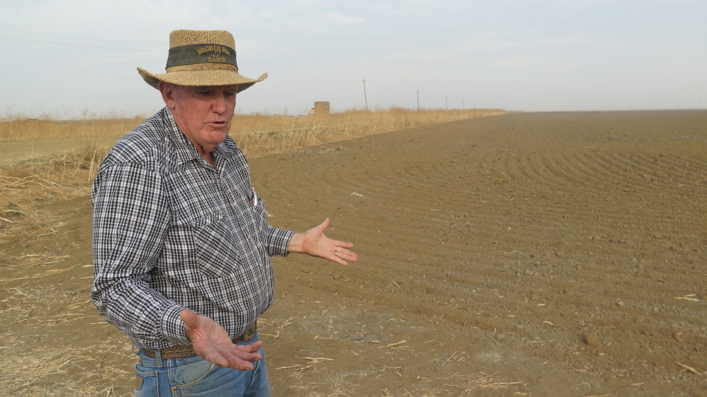 California's four-year drought is producing havoc in the state's farm sector. Jerry Maltby, a Colusa County rice grower, sold his water to southern California producers. Photo/Keith Schneider