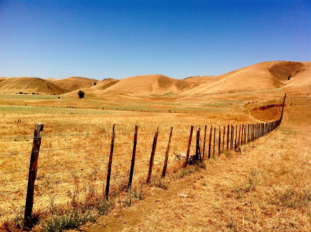 California's four-year drought idled thousands of acres of orchards and cropland, and dried grasslands like this one near Maxwell. Photo/Keith Schneider