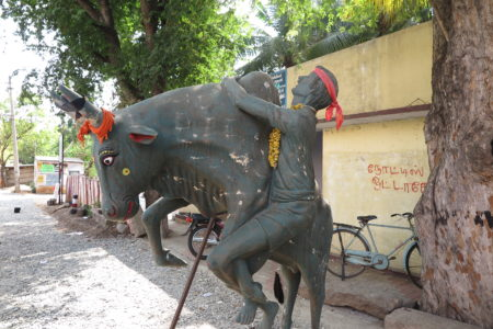 A statue displays Jallikattu, the Pongola harvest festival sport that features young men hanging on the side of a charging bull. Photo/Keith Schneider